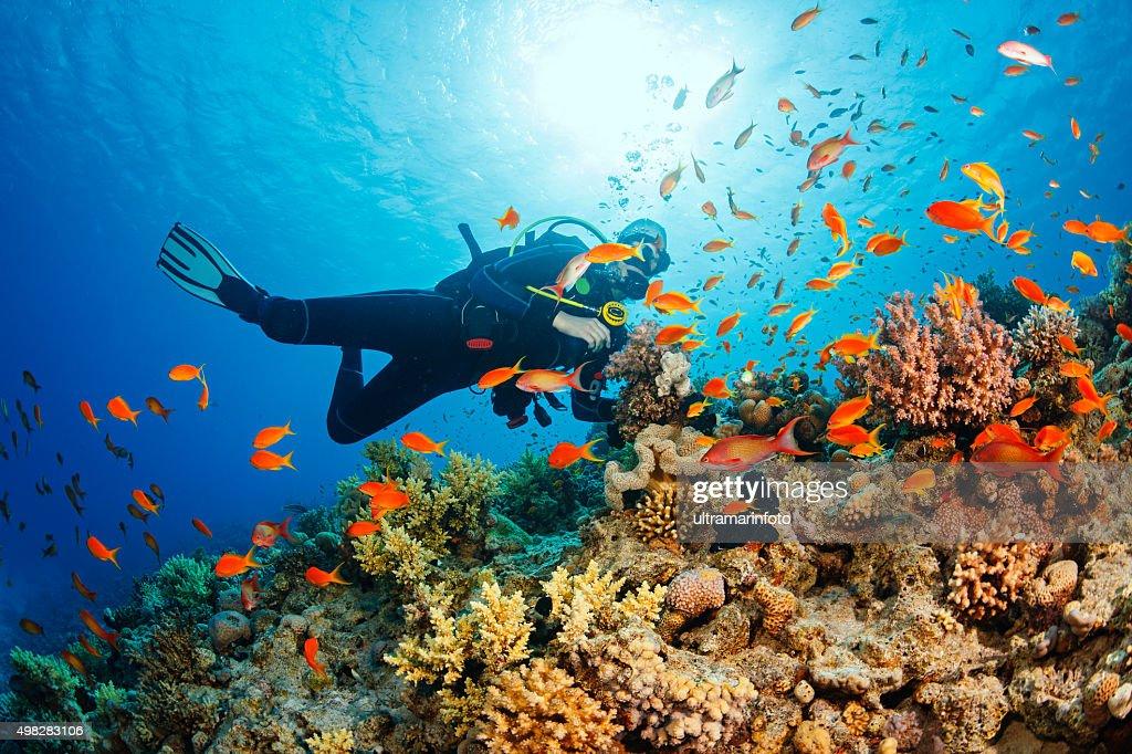 Underwater  Scuba diver explore and enjoy  Coral reef  Sea life : Stock Photo