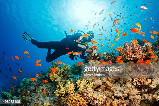 48 995 Scuba Diving Photos And Premium High Res Pictures Getty Images