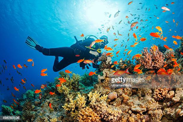 underwater  scuba diver explore and enjoy  coral reef  sea life - reef stock pictures, royalty-free photos & images