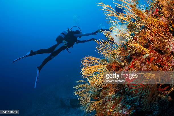 Underwater  Scuba divers enjoy  Explore coral reef   Sea life