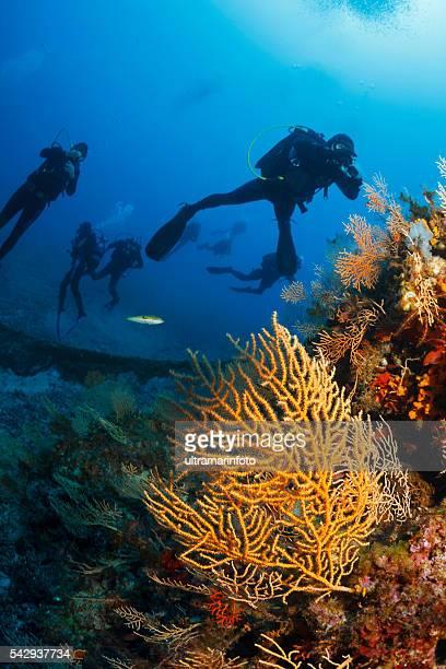 Unterwasser-Taucher genießen Sie die Korallenriff Leben im Meer