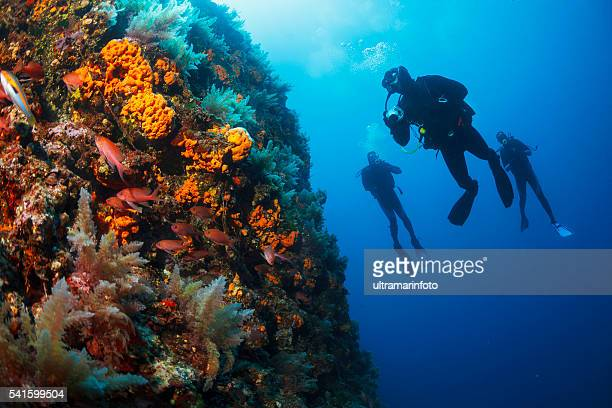 Underwater  Scuba divers enjoy  Explore  reef   Sea life  Sea sponge