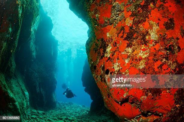 Underwater  Scuba divers   Explore coral reef   Sea life orange sponge