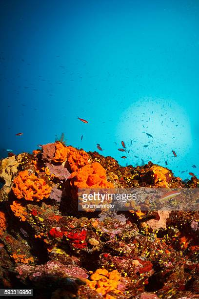 Underwater   Sea life  Coral reef  Orange sea sponge