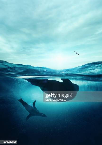 underwater seals - sea stock pictures, royalty-free photos & images