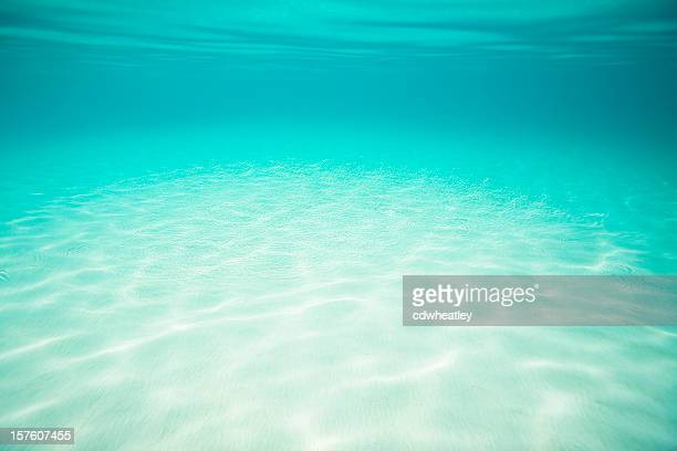 underwater seascape with white sand bottom in the Caribbean