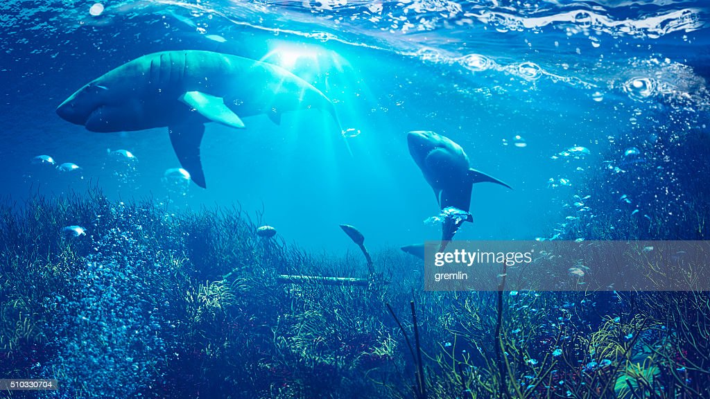 Underwater shark scene : Stock Photo