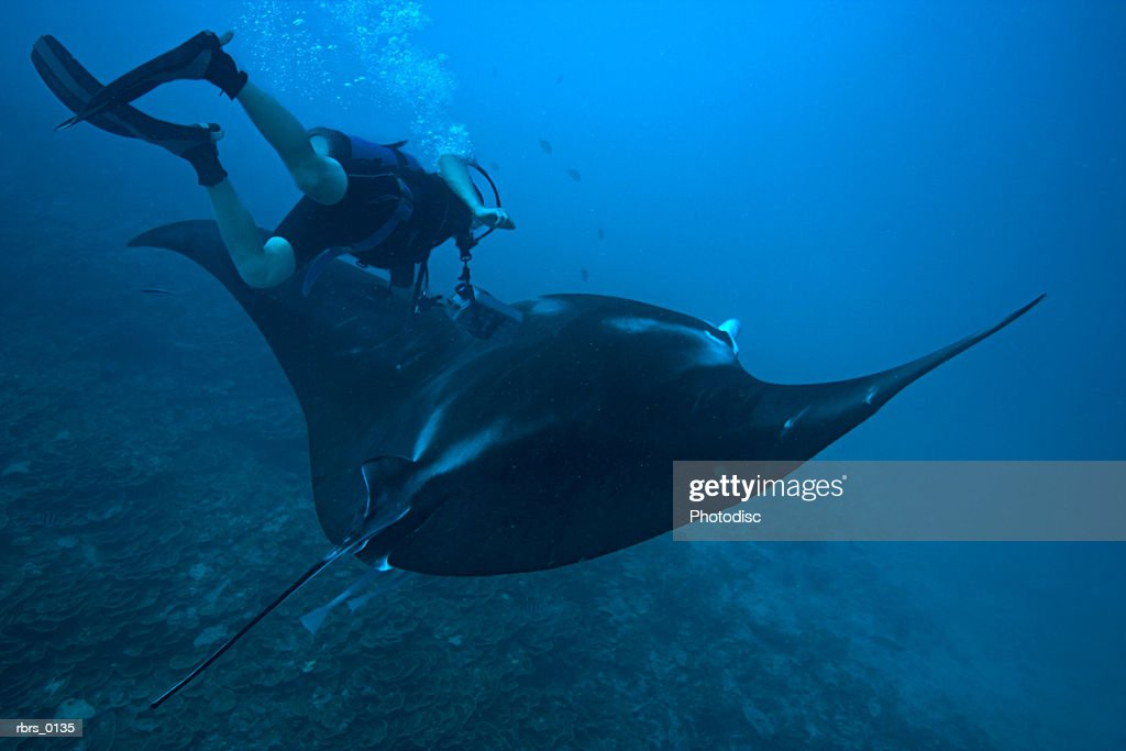 underwater shot of a scuba diver as he swims towards a large stingray : Foto de stock