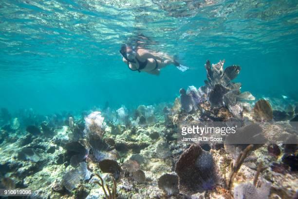 underwater shot of female snorkeler in riviera maya - playa del carmen stock pictures, royalty-free photos & images