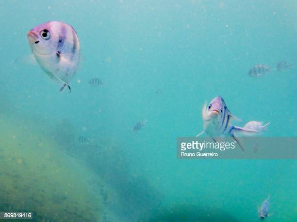 Underwater shot of fish looking at camera
