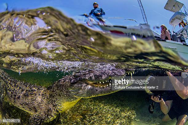 Underwater side view scuba diver taking photograph of American crocodile on seabed and boat on water surface