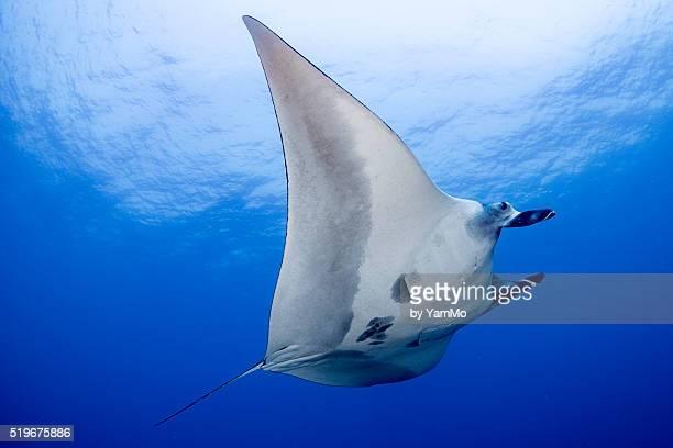 Underwater spaceship