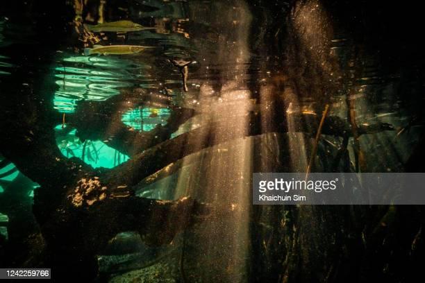 underwater sun ray and mangrove roots - スクーバダイビングの視点 ストックフォトと画像