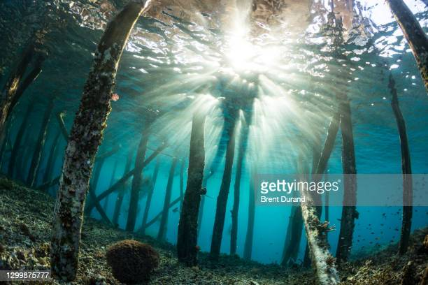 underwater sun rays and pier pilings - indo pacific ocean stock pictures, royalty-free photos & images