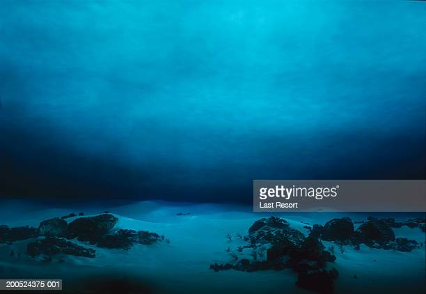 underwater terrain - undersea stock pictures, royalty-free photos & images