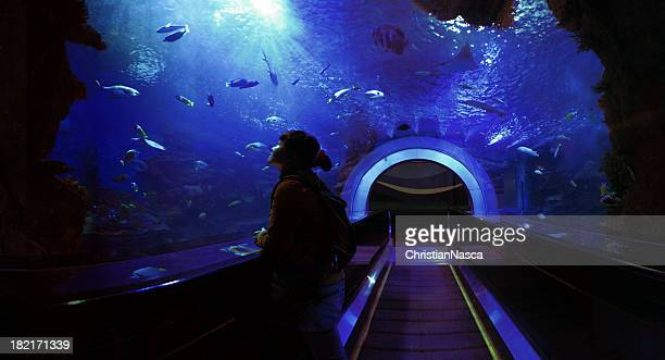 underwater tunnel - big fish stock pictures, royalty-free photos & images