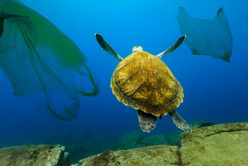 Underwater turtle floating among plastic bags. Concept of pollution of water environment. 1021574346