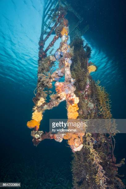 Underwater view of a coral covered ladder at the Tumby Bay jetty in the town of Tumby Bay, South Australia.