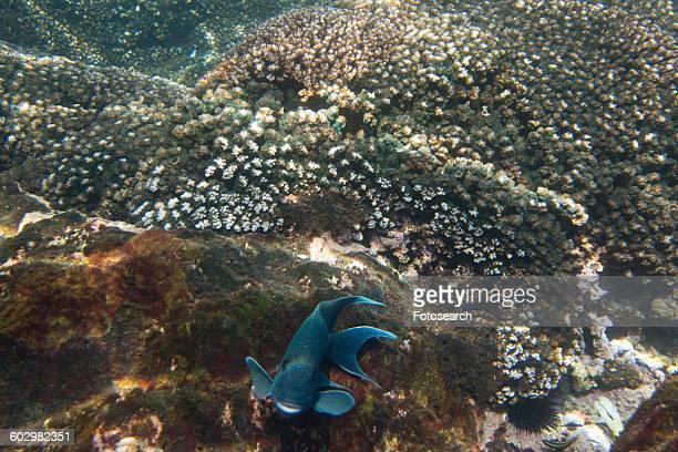 underwater view of a fish - ixtapa zihuatanejo fotografías e imágenes de stock