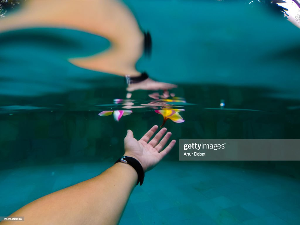 Underwater view of a guy diving in swimming pool touching a nice colorful Frangipani flower floating on water during travel vacations in Bali. : Stock Photo