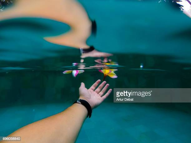Underwater view of a guy diving in swimming pool touching a nice colorful Frangipani flower floating on water during travel vacations in Bali.