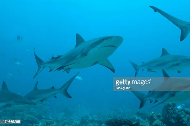 Underwater view of a school of sharks