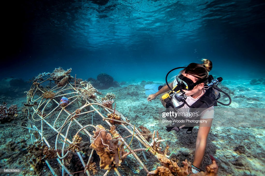 Underwater view of diver fixing a seacrete on seabed, (artificial steel reef with electric current), Lombok, Indonesia : Stock Photo