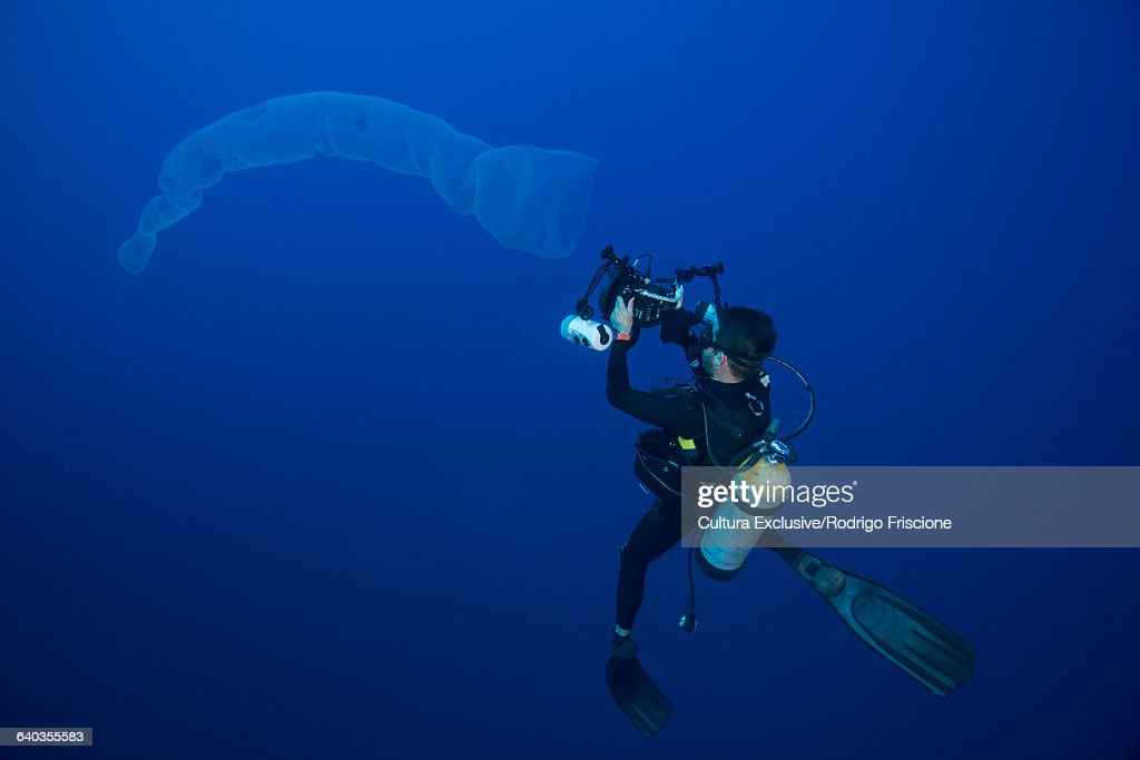 Underwater view of diver photographing siphonophora, Roca partida, revillagigedo, colima, mexico : Stock Photo