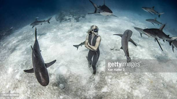 underwater view of female free diver standing on seabed surrounded by reef sharks, bahamas - surrounding stock pictures, royalty-free photos & images