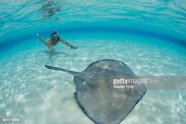 Underwater view of female snorkeler approaching Southern stingray at the Sandbar, Grand Cayma