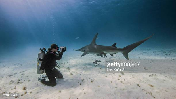 Underwater view of female underwater photographer, photographing from seabed