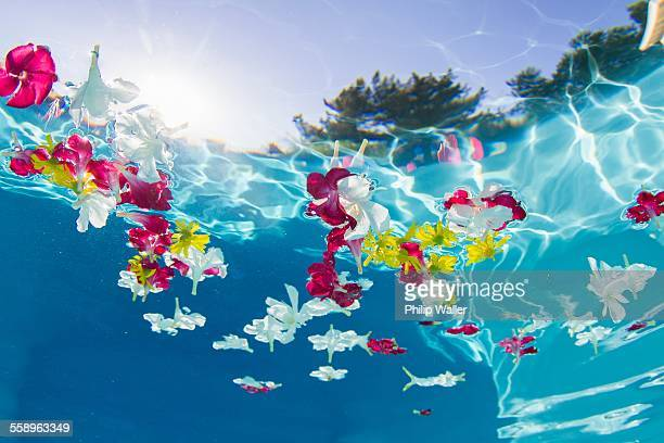 Underwater view of flower petals floating in swimming pool