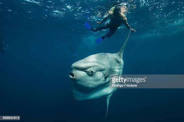 Underwater view of mola mola, ocean sunfish and local fisherman, Magadalena bay, Baja California, Mexico