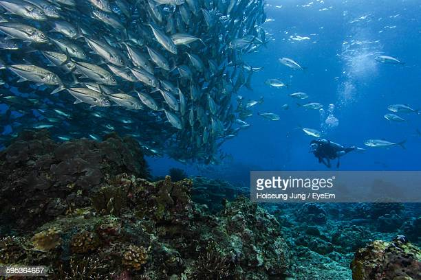 Underwater View Of Scuba Diver Swimming With Fish In Sea