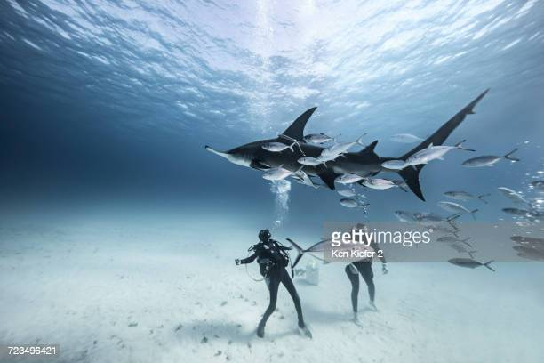 underwater view of two divers on seabed amongst fish - bimini stock photos and pictures
