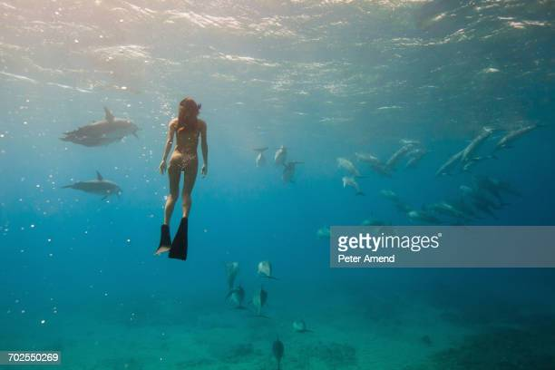 Underwater view of woman snorkeling with sea life, Oahu, Hawaii, USA