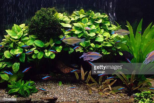 Underwater World. Aquarium