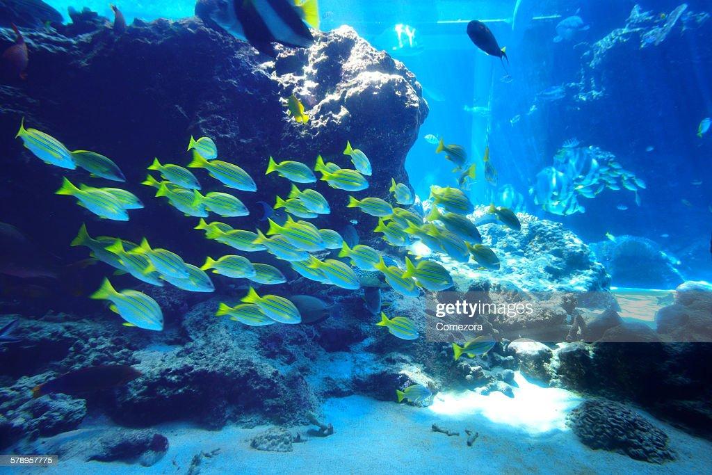 Underwater world : Stock Photo