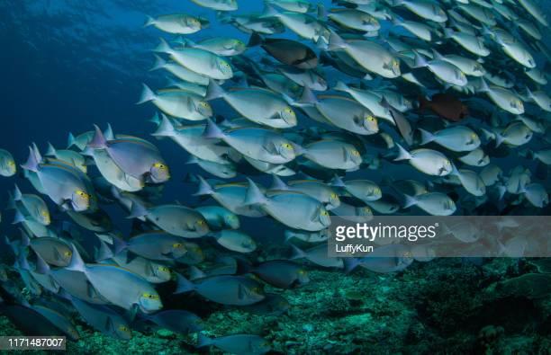 unterwasserwelt mit korallen und tropischen fischen - aquatisches lebewesen stock-fotos und bilder