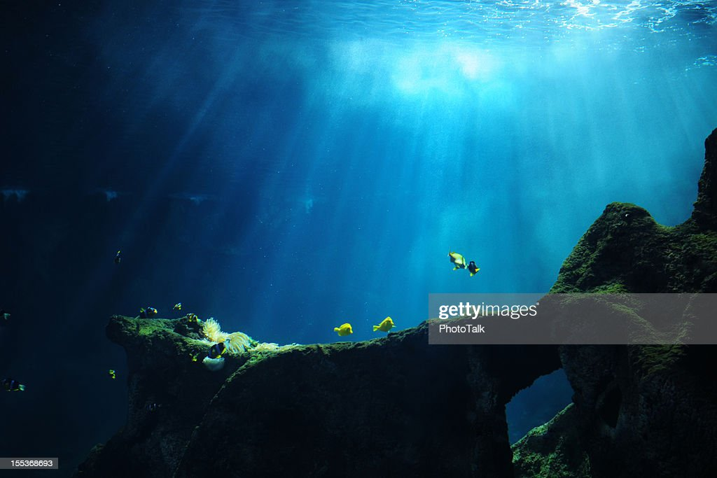 Underwater World - XLarge : Stock Photo