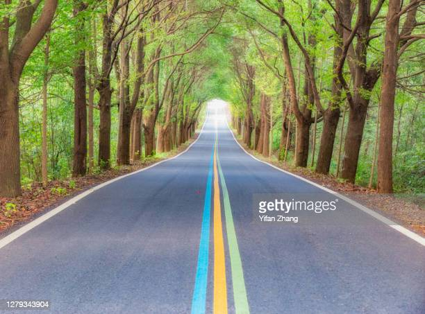 a undulating rainbow-sign road through the forest - changzhou stock pictures, royalty-free photos & images