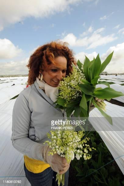 Une femme récolte du muguet dans l'exploitation maraîchère de Louis Douineau le 24 Avril 2008 à SaintJulien de Concelles Le muguet nantais qui...