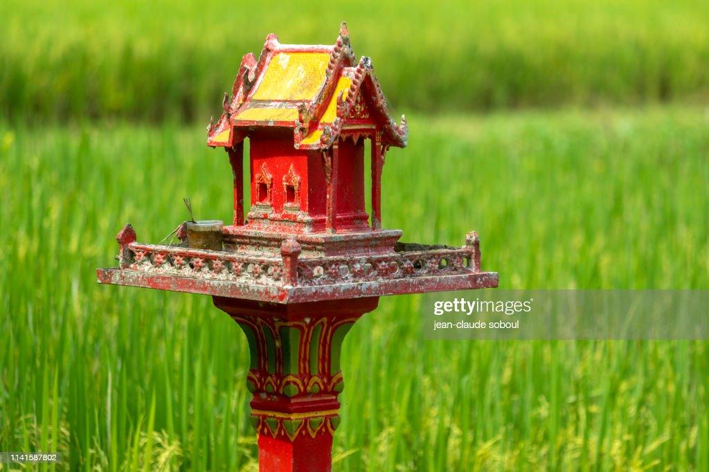 Une maison des esprits dans une rizière (thailande) : Stock Photo