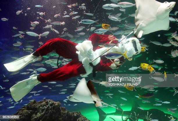 Une plongeuse avec un déguisement de pèreNoël nage parmi les poissons de l'Aquarium Sunshine le 2 décembre 2016 Tokyo Japon