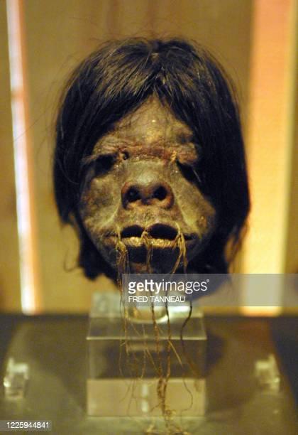 Une tête réduite de jivaro est exposée le 29 avril 2005 à l'Abbaye de Daoulas lors de l'exposition Rêves d'Amazonie consacrée au Brésil et à...