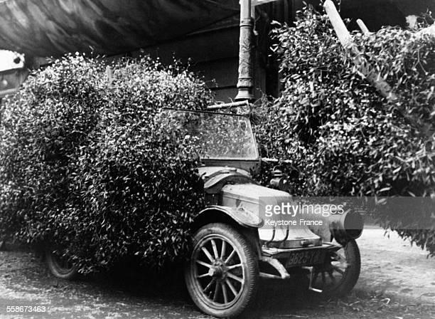 Une vieille automobile envahie par la végétation