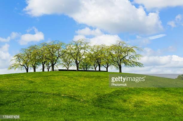 patrimônio mundial da humanidade pela unesco, o cemitério floresta - cemitério - fotografias e filmes do acervo