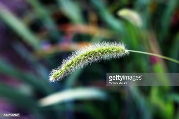 unfocused plant - moura stock photos and pictures