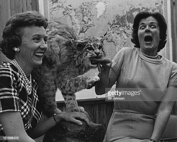 MAY 18 1963 MAY 26 1963 Unfriendly American bobcat is examined by Mrs Frank Kemp Jr and Mrs Harold Bowes They'll collect money Tuesday for new feline...