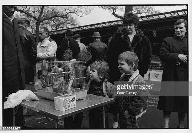 Unhappy children look at birds in a cage at a bird market on the Ile de la Cite